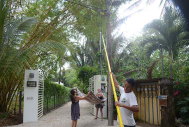Rescue team trying to save howler monkeys