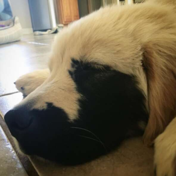 dog with genetic mutation
