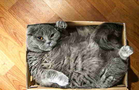 15 cats who refuse to accept that their boxes are too small the dodo. Black Bedroom Furniture Sets. Home Design Ideas