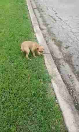 Abandoned puppy in Fort Worth dumping ground