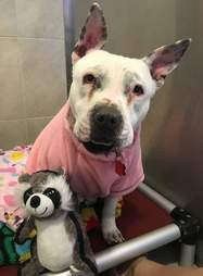 Dog who was rescued from neglect