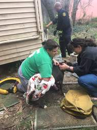 Pit Bull Falls 30 Feet Into An Abandoned Well Under Her House