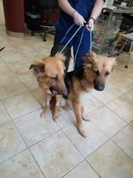 Bonded shelter dogs