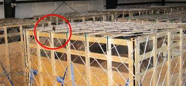 Live horse export crate size violation
