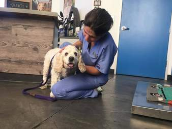 20 year old dog dumped at shelter