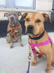 Dog rescued from dog fighting still likes other dogs