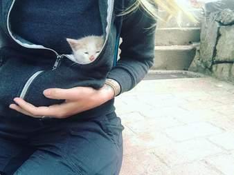 Rescued street kitten in Peru