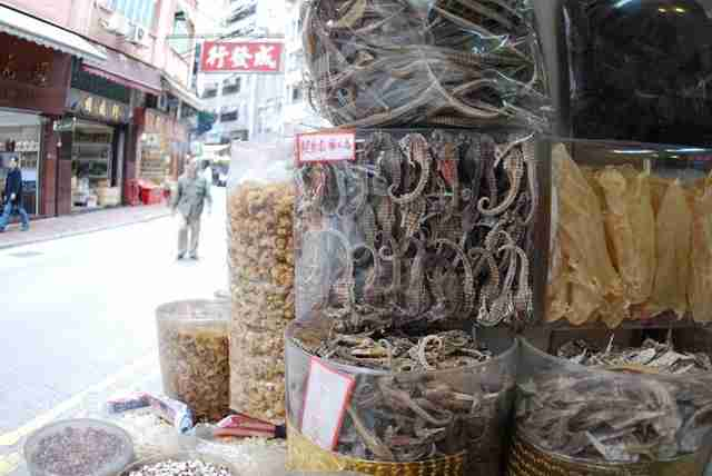 Seahorses being sold in Hong Kong