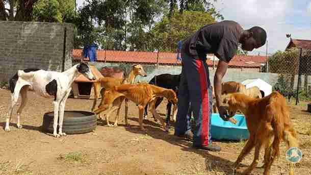 Emaciated greyhounds rescued from neglect in South Africa