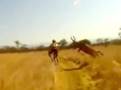 antelope hits bike rider