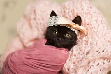 photographer does newborn shoot with kitten