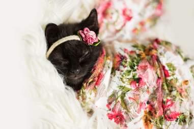 photographer does newborn photoshoot with kitten