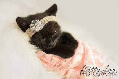 Photographer does newborn photoshoot for kitten