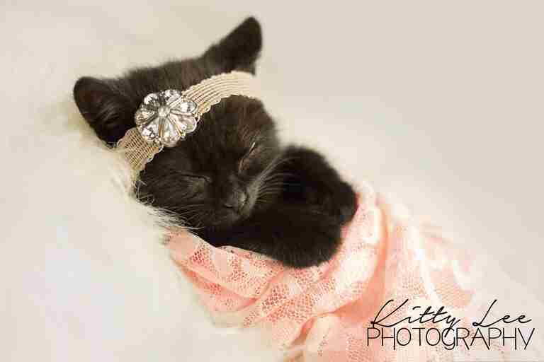 Photographer does newborn photoshoot for kitten