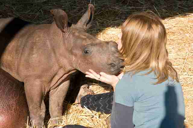 Baby rhino orphan with caregiver