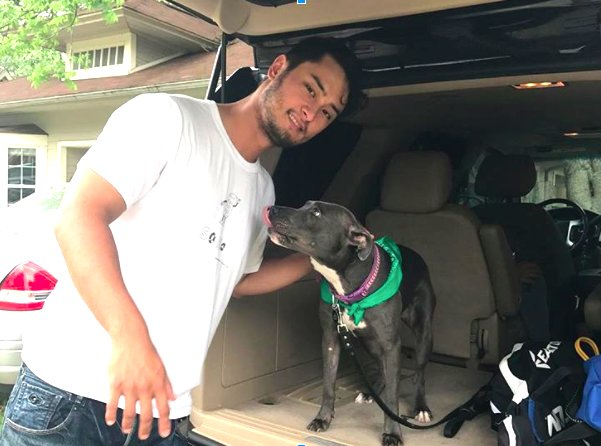 Yu Darvish dog