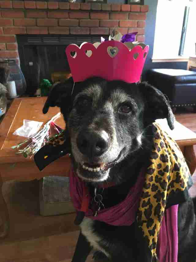 Senior dog dressed up for prom