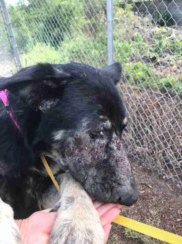Neglected dog getting pet by rescuer
