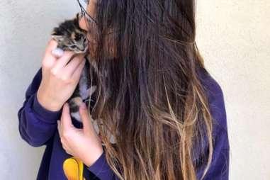 kitten hides in tissue box