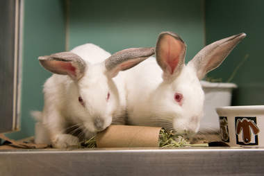 adoptable bunnies in shelter
