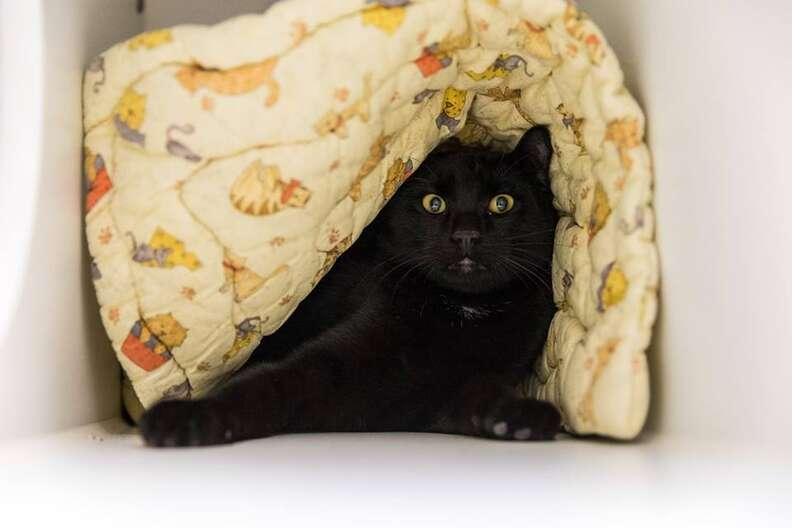 cat up for adoption in shelter