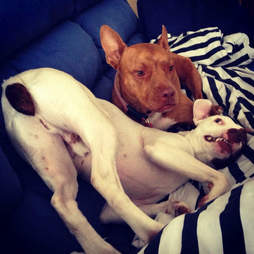 Rescue dogs snuggling together