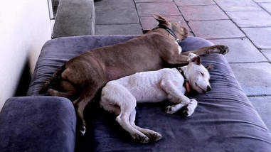 Rescue dogs napping together