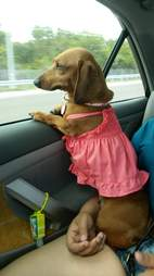 Dog dressed up in outfit