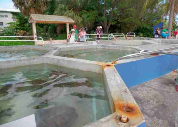 Tank at Cayman Turtle Centre