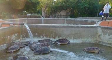 Cayman Turtle Farm concrete tanks