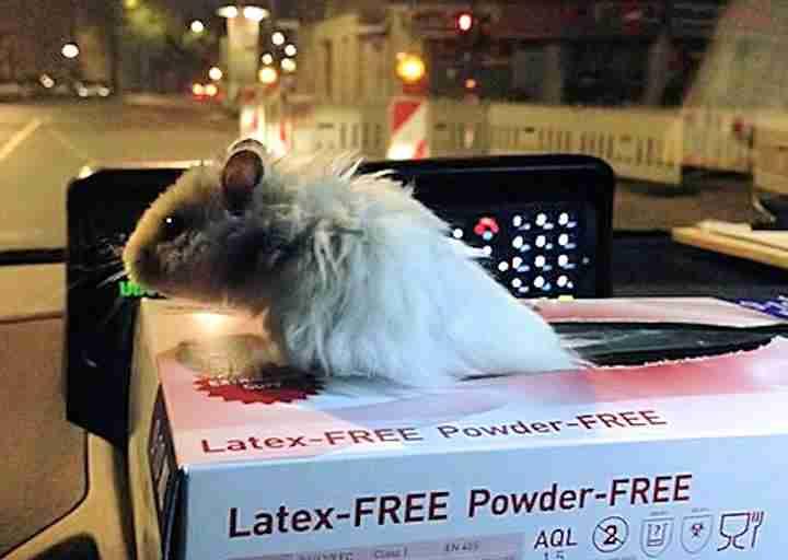 Berlin police rescue a lost hamster the dodo share on facebook pin it berlin police sciox Gallery