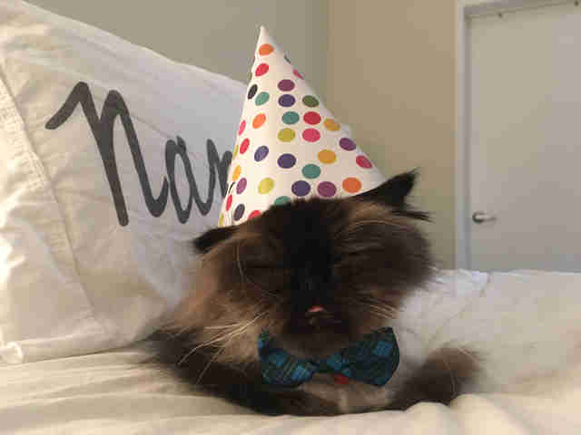 Rescue cat wearing party hat