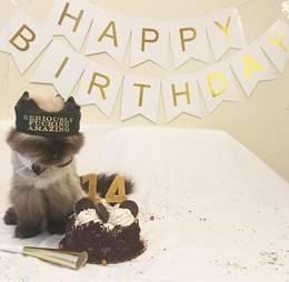 Birthday part for senior rescue cat