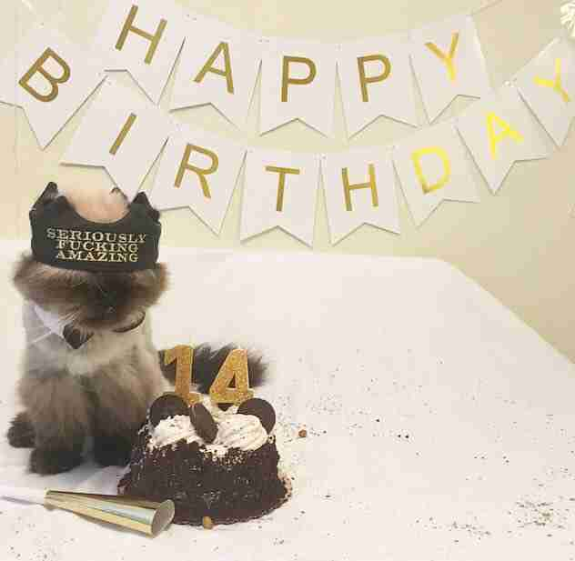 Birthday part for senior rescue cat