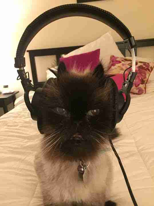 Rescue cat wearing earphones