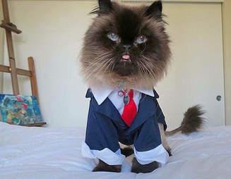 Senior cat in cute outfit