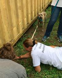 Stray dog leads rescuers to shipping container