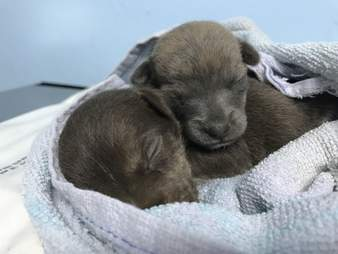 Two rescued puppies