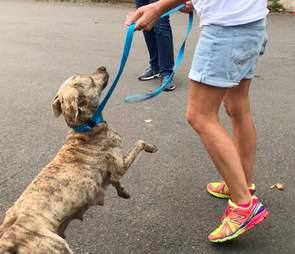 Stray dog on a leash