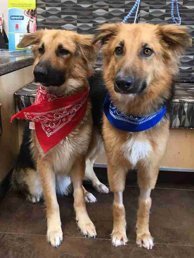 Bonded shelter dogs get adopted together