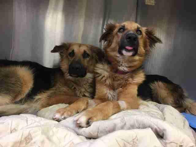 Bonded dogs in kill shelter