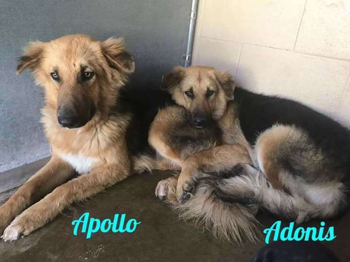 Bonded dogs saved from shelter
