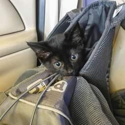 Kitten in hiking backpack