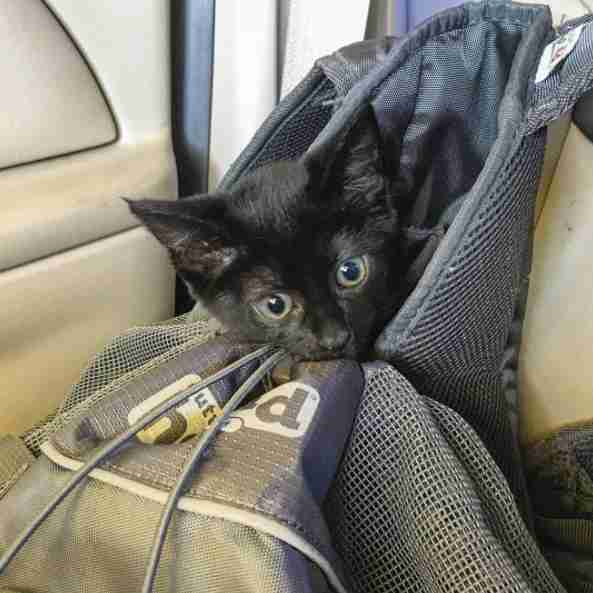 Kitten in hiking backpack