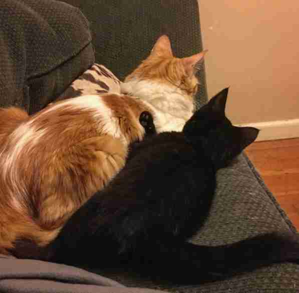 Cats snuggling together