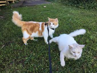 Cats on lawn together