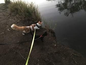 Adventure cats exploring together