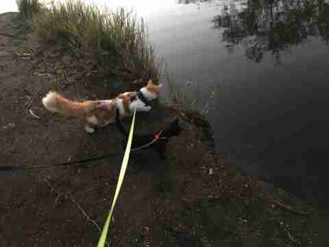 Adventure cats exploring together