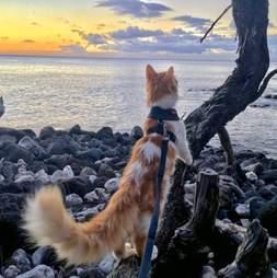 Adventure cat exploring the beach