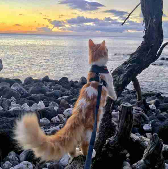Adventure cat exploring the beach